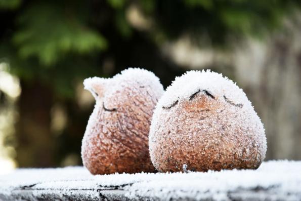 Zima nazahradě má své poetické kouzlo, které nenahradí žádná elektronická vymoženost nového digitálního věku.