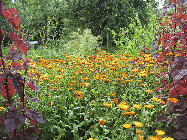 Zatímco dříve byl chloubou zahradníka pečlivě střižený trávník, dnes vítězí spíše pestrobarevné louky pro krásný pohled, pastvu včel amotýlů.