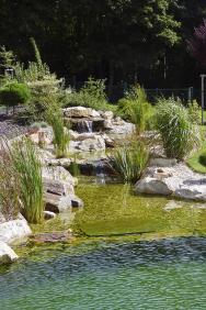 Pro osvěžení azchlazení zahrady apředevším jejich majitelů je nejlepší koupací jezírko. Kaskáda pomáhá čistit aprovzdušňovat vodu azároveň uvolňuje dookolí vodní aerosol, který zvlhčuje vzduch.