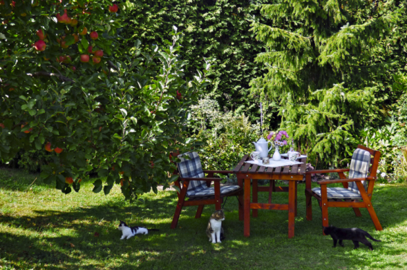 Blahodárný stín pod vzrostlým stromem je doslova balzám pro tělo iduši. Anemusí to být jen okrasný strom. Naobrázku je vynikající odrůda jabloně Rubín, která vás napodzim nadchne. Stačí ji vzimě prořezat ao víc se nestaráte. Vpozadí smrk omorika,  také velmi vhodný dosuchých podmínek.