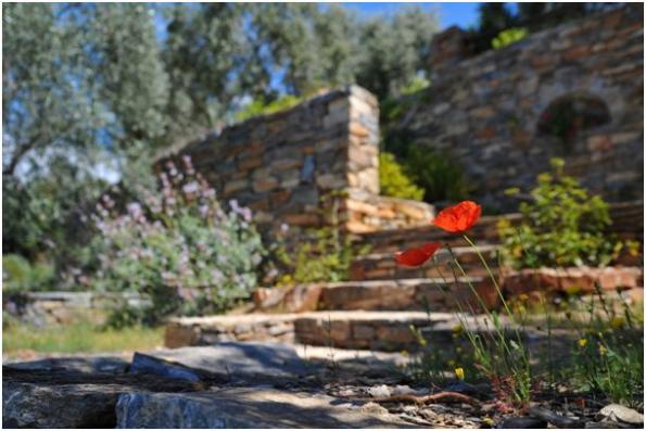 Na jaře všechno rozkvétá a ožívá a mnoho z nás chce tyto dny strávit venku, na čerstvém vzduchu. Pokud váš zahradní nábytek na podzim dosloužil nebo se chcete nechat inspirovat, podívejte se, co všechno může vaší zahradu vylepšit a udělat z ní svatyni rodinného klidu a pohodlí. (Zdroj: pixabay.com)