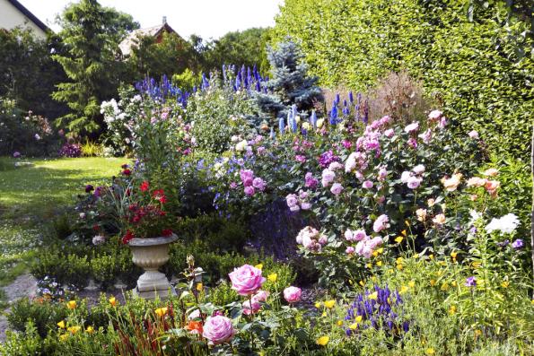 Růže jsou jedny znejstarších okrasných rostlin. Již dlouho před naším letopočtem zdobily zahrady čínských císařů aperských ababylonských vládců. Starověký Řím byl růžemi doslova posedlý…