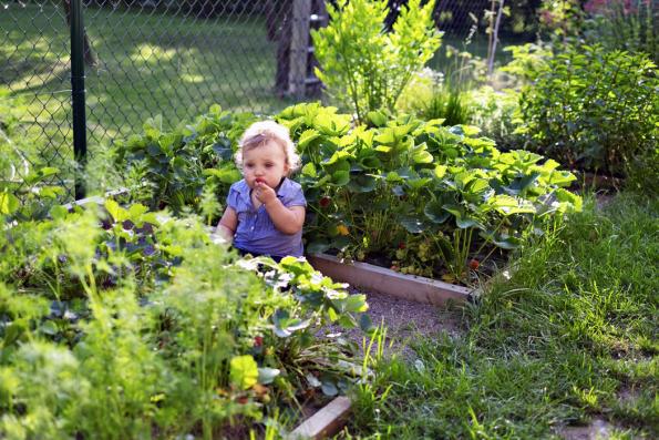 Zahrada nejenom voní, ale všem čtyřem dětem také chutná. Zelenina abylinky se nacházejí převážně vevyvýšených záhoncích, drobné ovoce bylo vysázeno pocelé zahradě.