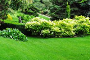 Jak založit pravý anglický trávník (Ilustrační foto)