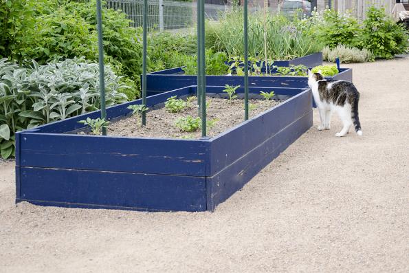Vyvýšené záhony jsou určeny kpěstování bylinek azeleniny. Díky barevnému nátěru zahradu oživují vtipným akcentem.
