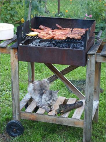 Kočka na grilu, foto: Marcela Machů