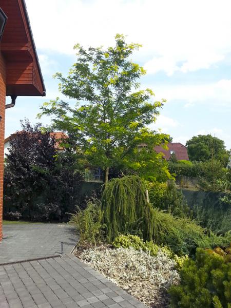 Vzrůstné druhy stromu jsou krásné, ale někdy mohou vyvolat i sousedské spory
