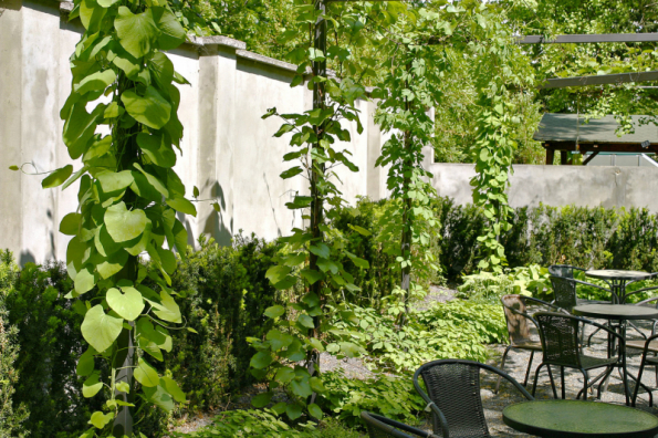 Zelené sloupy pergoly porostlé popínavými rostlinami vytváří v zahradě pravidelný rytmus