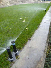 Pokud to je jen trochu možné, zalévejte trávník výhradně dešťovou vodou a ideálně ve večerních hodinách