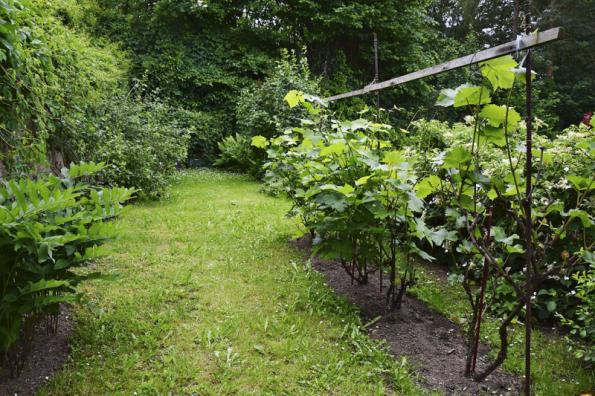 Pro bylinný trávník je typická pravidelná seč, ale nikoliv nízká. Dvouděložné byliny jsou tu vítané