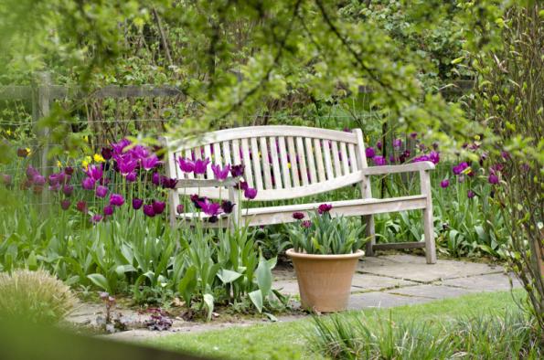 Tulipány hýří bohatstvím květů, ale po pár letech v kvetení polevují. I to je důvod, proč majitelé cibule každé druhé jaro po odkvětu vyrývají a na podzim sází nové