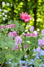 O tom, že je Vanessa kytkoholička, není pochyb. Všude, kam se podíváte, něco kvete. K jejím nejoblíbenějším jarním květinám patří růžově kvetoucí tulipány a srdcovky