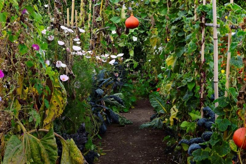 10 nápadů pro zeleninovou a ovocnou zahradu