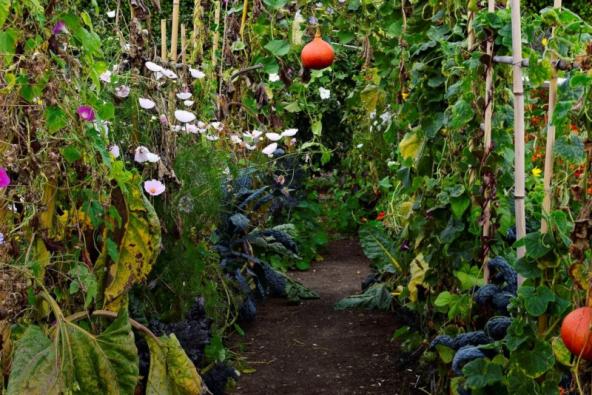 Snad žádná jinázahradanevyžaduje tolik praktických řešení jako ta užitková. Vyvýšené záhony, dozrávající plody na stromech a pestrobarevné odrůdy všech možných druhů zeleniny za pohled prostě stojí, tak se nebojte je zapojit do dění nazahradě