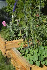 Pokud to jen trochu jde, péči o zeleninovou zahradu si usnadněte. Dobrým pomocníkem jsou především vyvýšené záhony. Za ideální je považována výška okolo 100 až 120 centimetrů