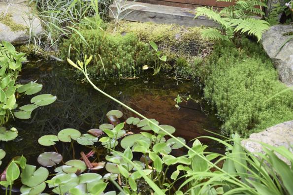 V současné době jsou čím dál tím více oblíbené přírodní formy vodních prvků, které jsou soběstačné