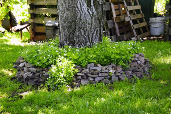 Jako náhradu můžete použít i některé bylinky, vhodná je třeba mařinka vonná