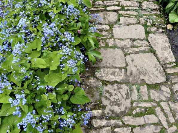 Ve stínu nesvědčí trávníku kromě nedostatku slunce ani nevyrovnaný vodní režim. Vyzkoušejte třeba stínomilný pomněnkovec velkolistý, který na jaře rozkvete nebesky modrými květy