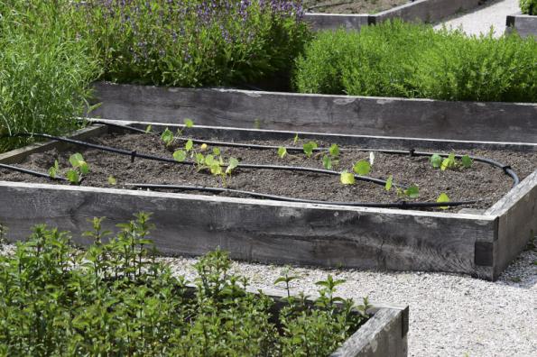 Automatická závlaha výrazně sníží spotřebu vody na záhonech i ve skleníku. Nejčastěji se používá kapková závlaha v podobě perforovaných hadic rozvedených po povrchu půdy