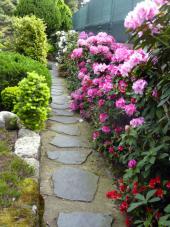 Procházet se kamennou pěšinou s rododendrony je opravdový zážitek plný vizuálních dojmů a vůní