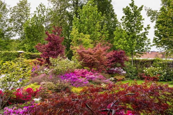Majitelé mají rádi azalky a pěnišníky, zahradní architekti je proto zakomponovali na několika místech do záhonů