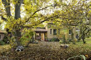 Ať se mezi stromy převalují cáry mlhy, nebo do jejich řídnoucích korun bubnuje déšť, v hloubi téhle zahrady stále panuje vlídná atmosféra. Podzim ji proměnil v magickou krajinu, ve které si jako v pohádce připadají i ti, kdo na skřítky a kouzla nevěří (foto: Adéla Taitlová)
