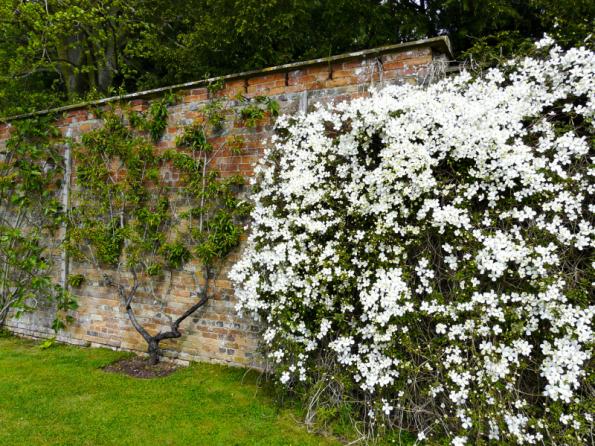 Pokud je plot vysoký, snažte se jeho působnost změkčit výsadbou vhodných rostlin. Popínavky nebo špalíry z ovocných stromů budou vždy dobrou volbou