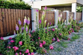 Nemyslete jen na prostor v rámci vašeho pozemku, na plot se budete dívat i z ulice, i z této strany by měla zahrada vyhlížet přívětivě