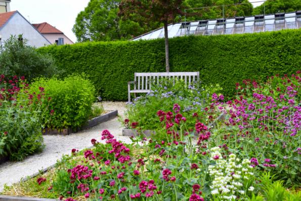 Živý plot slouží spíše k ozelenění klasického plotu, většinou pak toho z pletiva