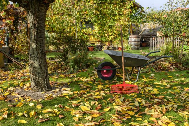 Příprava zahrady na zimu: Co je třeba udělat, aby ji ve zdraví přečkala?