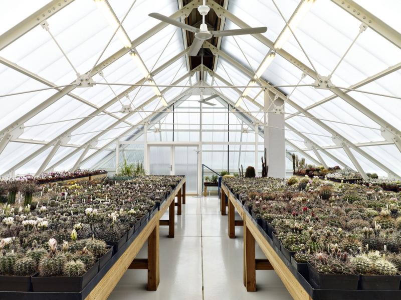 V podkroví je pro kaktusy dost místa, nevznikl tu známý problém s šikminami. Stojany na květníky si udělal majitel domu sám z modřínového dřeva. Bíle natřené konstrukce s táhly mají jemné detaily, navíc jsou pružné. V průčelí u vchodu bylo místo polykarbonátu použito sklo, takže ze skleníku je vidět dolů na terasu. Přesah střechy přitom brání tomu, aby bylo do skleníku vidět zvenku