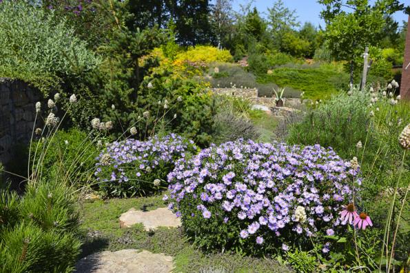 V trvalkových záhonech zahradní architekti kombinovali i rostliny s odlišným charakterem růstu. Vedle vzrůstných druhů tak mezi kamennými nášlapy rostou třeba jen několik centimetrů vysoké půdopokryvné mateřídoušky
