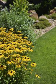 Ačkoliv tu převládají nepůvodní druhy rostlin z různých částí světa, architekti se i tak snažili do zahrady začlenit i původní druhy vegetace, která je pro oblast typická