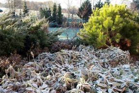 Zahrada může být hlavně během zimy poněkud skoupá na barvy, což je pro toto roční období typické. Díky absenci zeleně si budete mnohem více všímat drobných detailů, jako je třeba struktura listů stálezelených trvalek