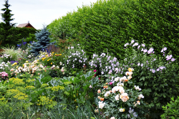 Okrasná i užitková zahrada. Mnoho plodin je zároveň i pěkných na pohled, vlevo dekorativní kopr a cuketa, která navíc krásně kvete
