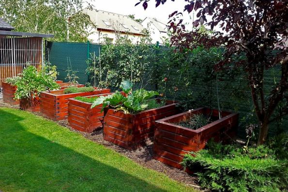 Na českých zahradách se nejčastěji setkáte s vyvýšenými záhony vyrobenými ze smrkových trámků. Smrkové dřevo by ovšem bez kvalitního nátěru nebo laku příliš dlouho nevydrželo